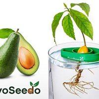 kit coltivazione avocado 01