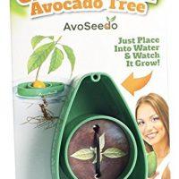 kit coltivazione avocado 02