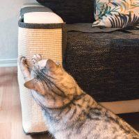 copridivano tiragraffi per gatti – copertura antigraffio divano 05